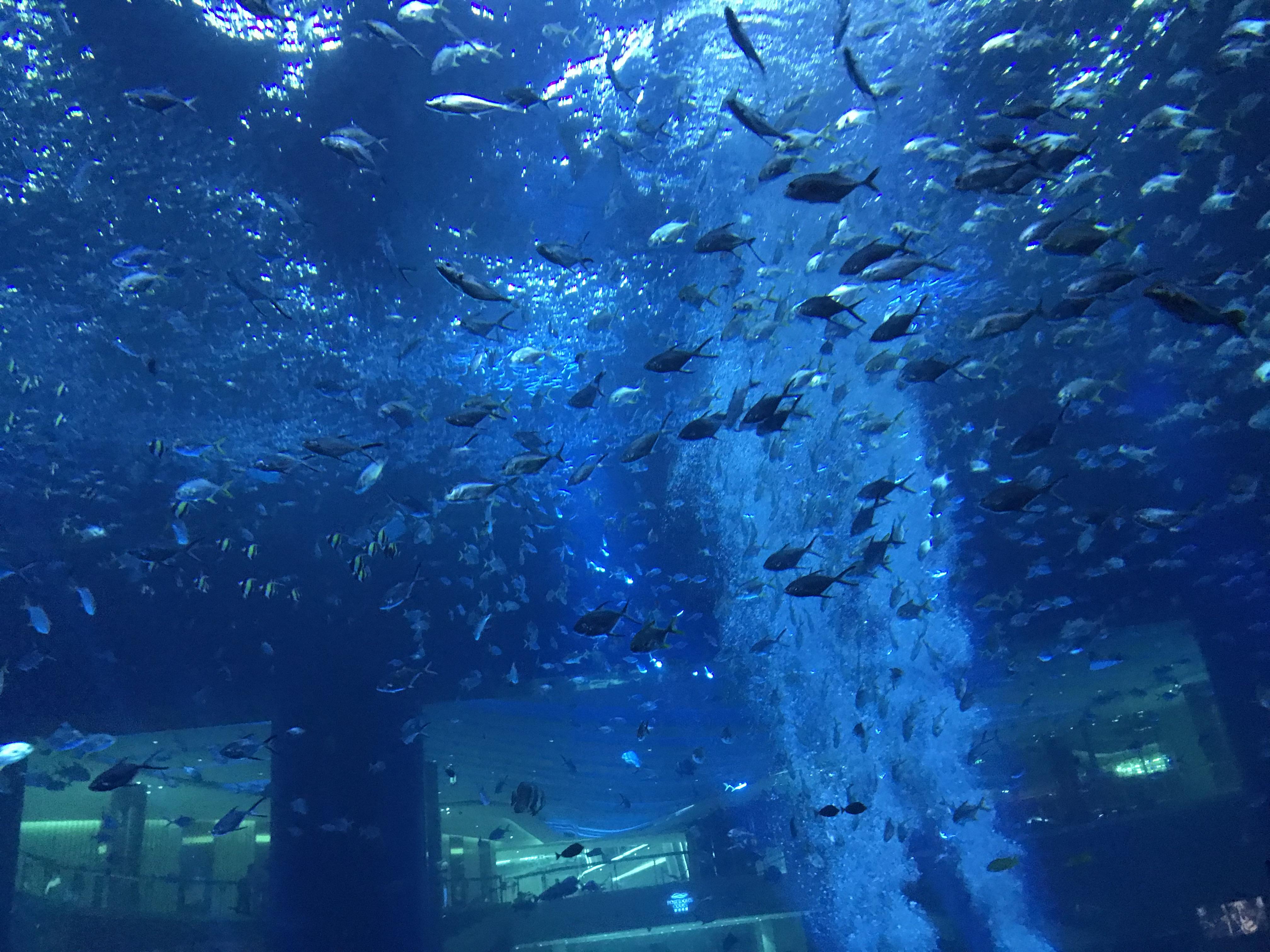 三亚海棠湾亚特兰蒂斯体验,水世界很精彩~~~
