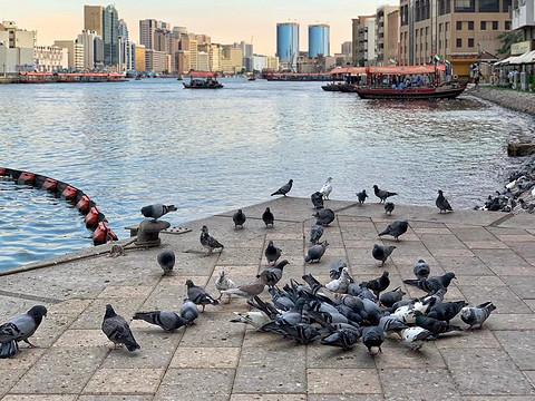 阿联酋游记(七)迪拜一日游