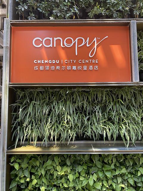 #飞客11周年#打卡成都希尔顿canopy