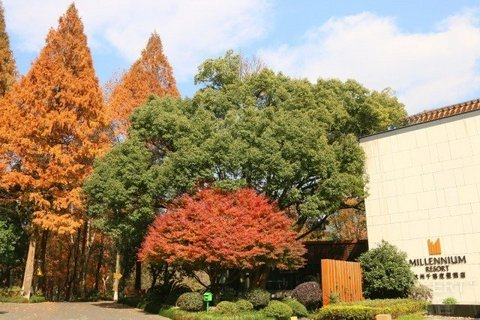 【九溪风景区 森林全景泳池】¥1688/2晚--杭州千禧度假酒店度假套餐,含早午餐