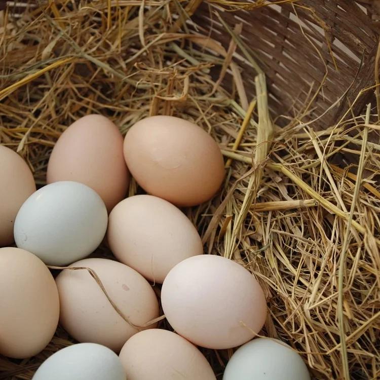 土鸡蛋|无抗生素 | 黄山散养鸡蛋 30枚